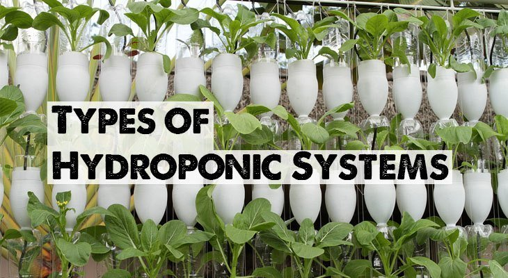Types Of Hydroponic Systems Homemade And Commercial