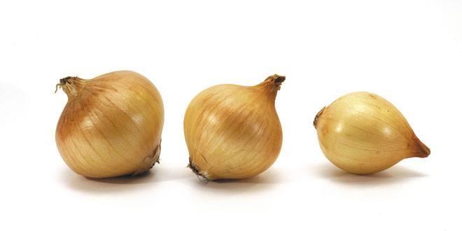 Grow Hydroponic Onions