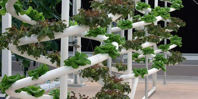Successful Hydroponic Herb Garden productshipmarinecom