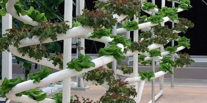 Hydroponics vs. Soil: 7 Reasons Hydroponics Wins | Epic Gardening