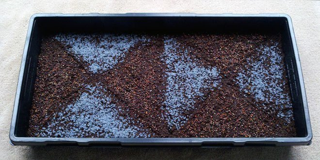 How to Plant Microgreen Seeds