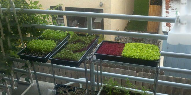 Building A Microgreens Business Microgreens Epic Gardening