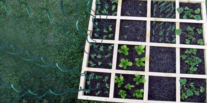 Plant Spacing in Hydroponics