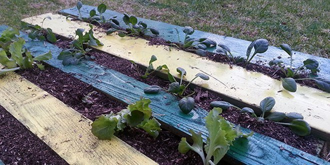 How to Build a DIY Pallet Garden for Thirty Bucks
