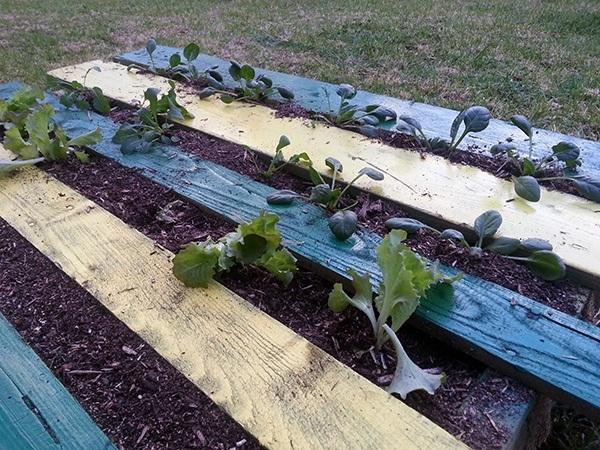 DIY Pallet Garden Finished