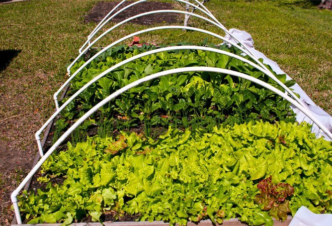 square foot garden with trellis