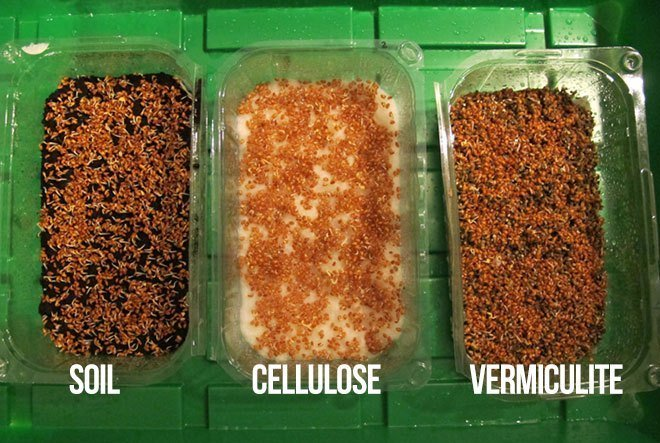 how to grow sprouts without soil