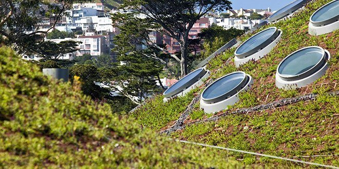 Green Roof Pictures