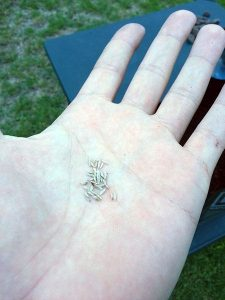 handful-of-seeds