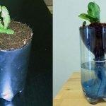 hydroponics-for-kids