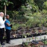 illegal-gardens