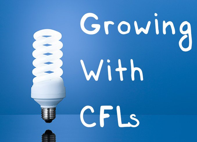 Cfl Grow Lights A Beginner S Guide To Growing With Cfls