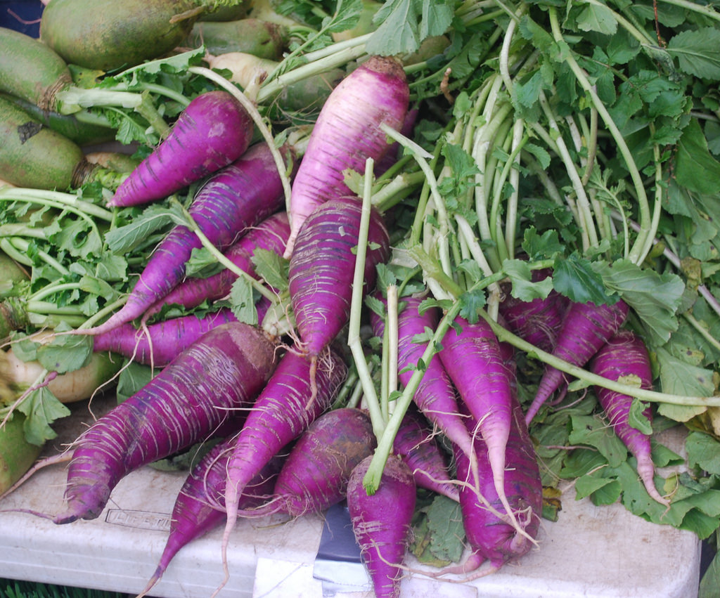Purple Daikon radishes