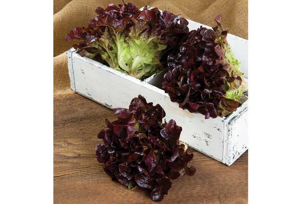 Rouxai lettuce