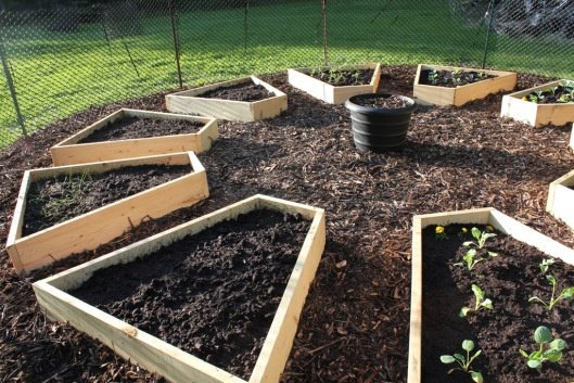 5 Great Vegetable Garden Ideas