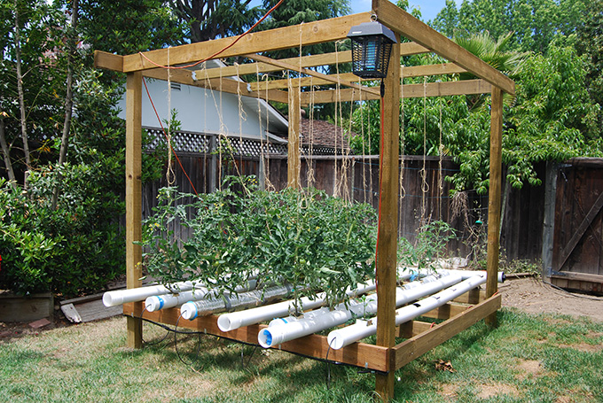 5 great vegetable garden ideas Tomato garden design