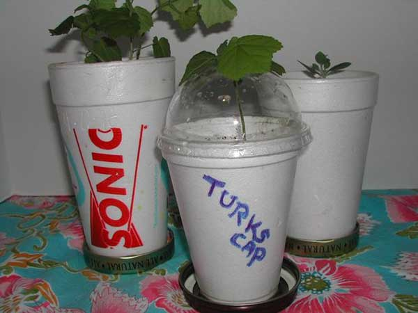 1. Turn Styrofoam Cups Into Planters