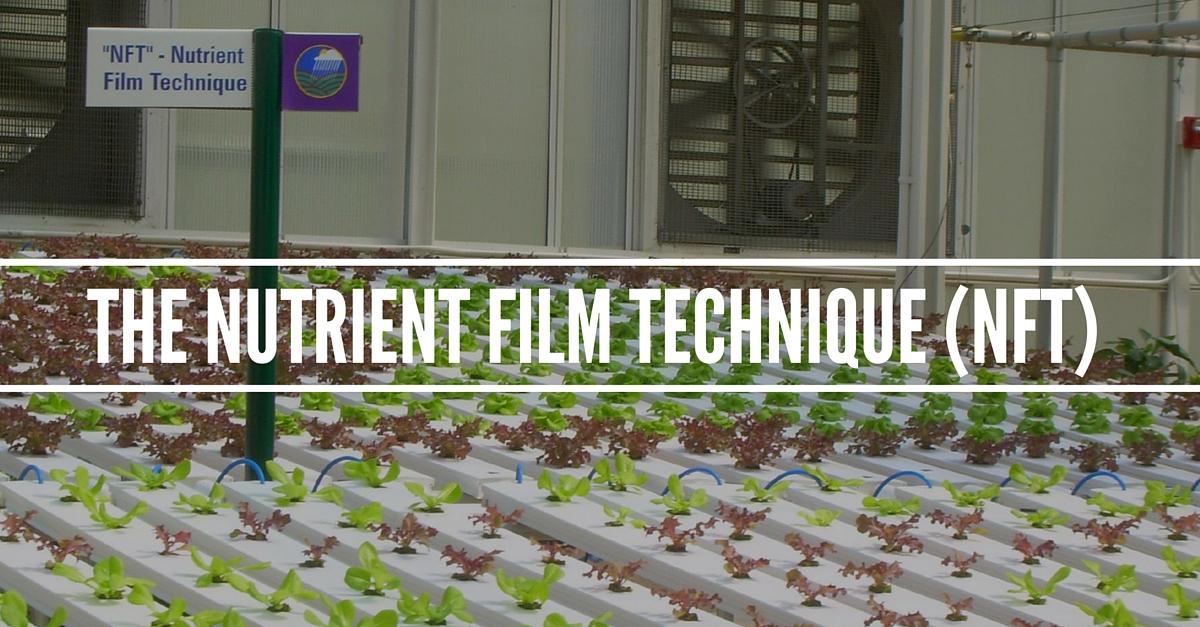 The Nutrient Film Technique Explained