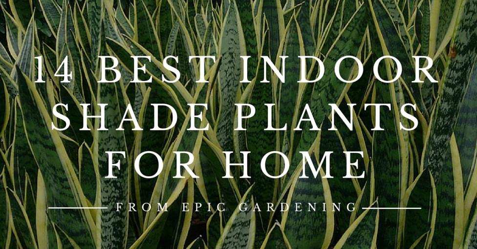 Best indoor shade plants for low light rooms - Indoor plants for shade ...