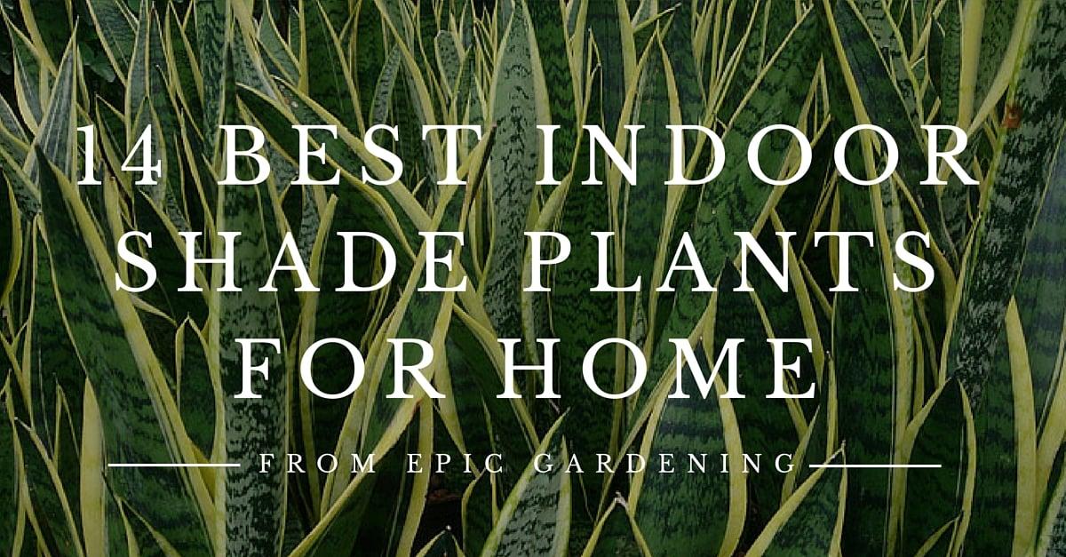 Indoor Shade Plants