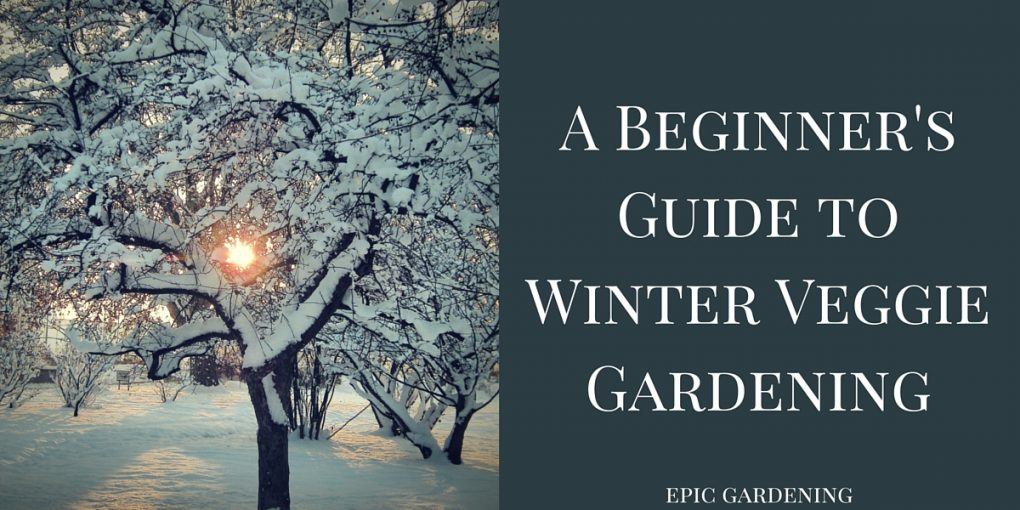 A Beginner 39 S Guide To Winter Vegetable Gardening