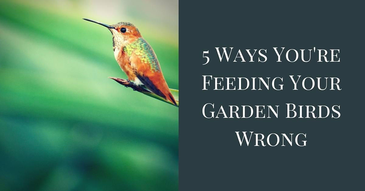 Feeding Garden Birds