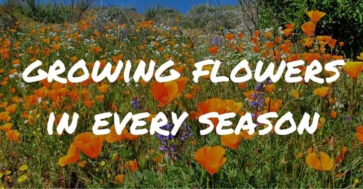 Seasonal Flowers Growing Guide