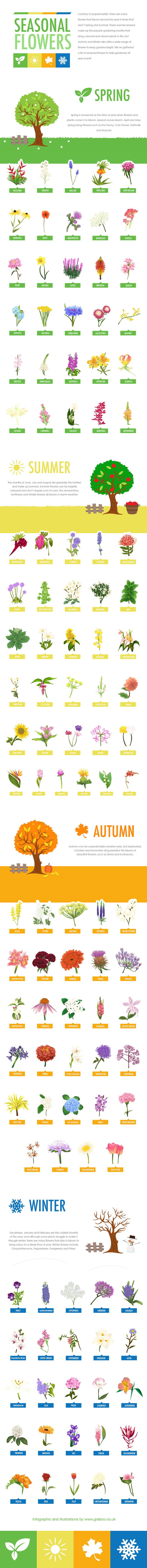 Seasonal Flowers Guide