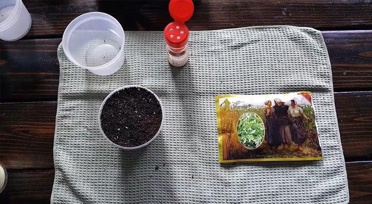 Arugula microgreens materials