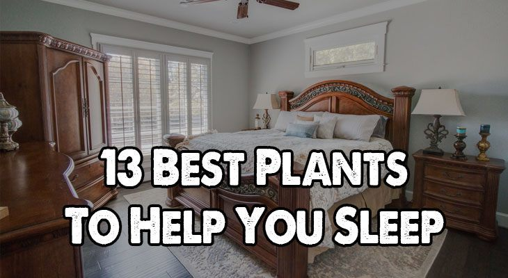 13 Best Plants To Help You Sleep