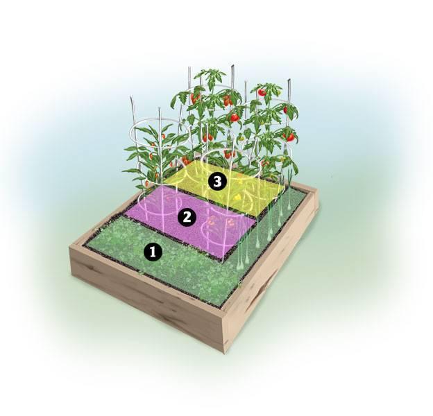 Salsa garden planting