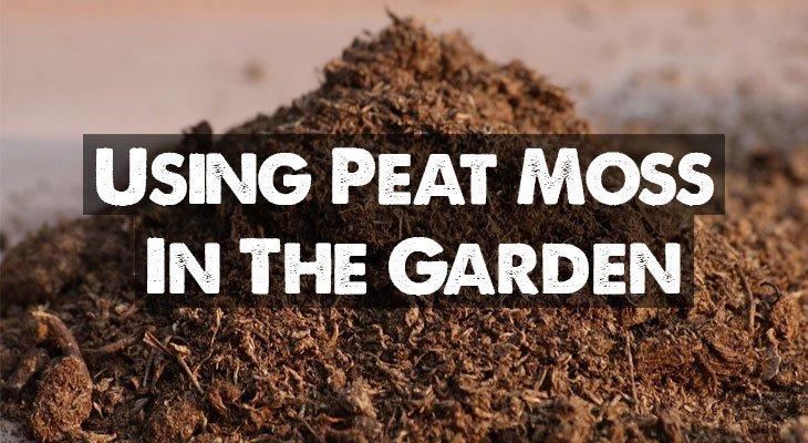 Sphagnum Peat Moss in Garden