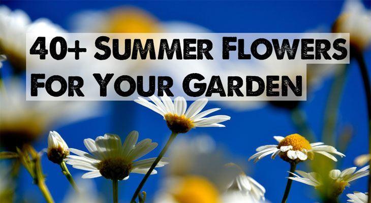 Summer Flowers For Your Garden