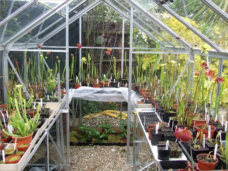Carnivorous plants and greenhouses