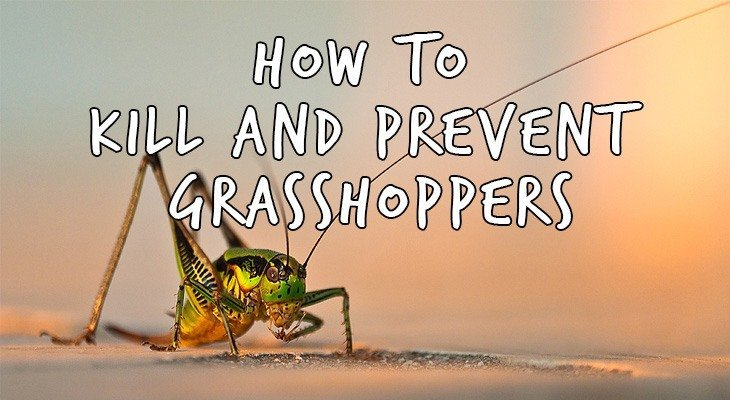 How to Kill Grasshoppers