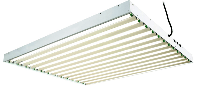 An example of a T5 fixture with 12 bulbs.