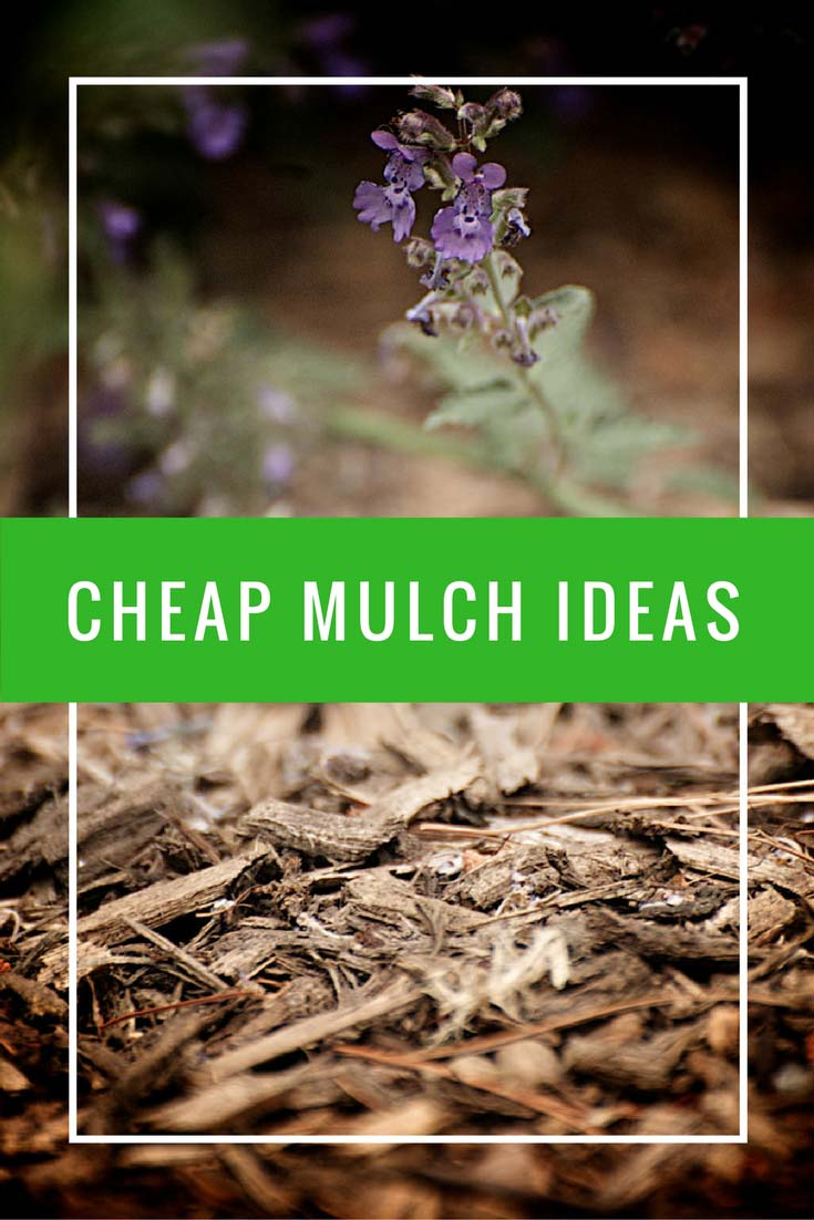 24 cheap mulch ideas to save money