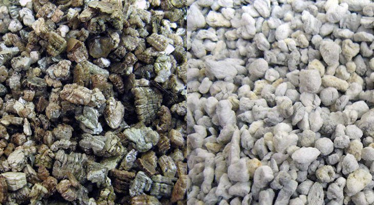 Perlite Vs Vermiculite What S The Difference