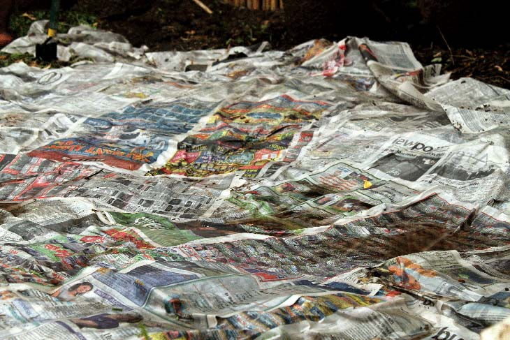 Wet used newspaper mulch