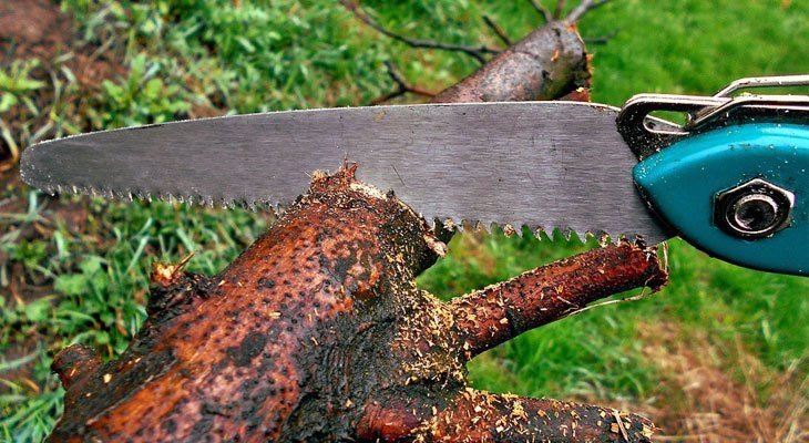 The Best Folding Pruning Saws