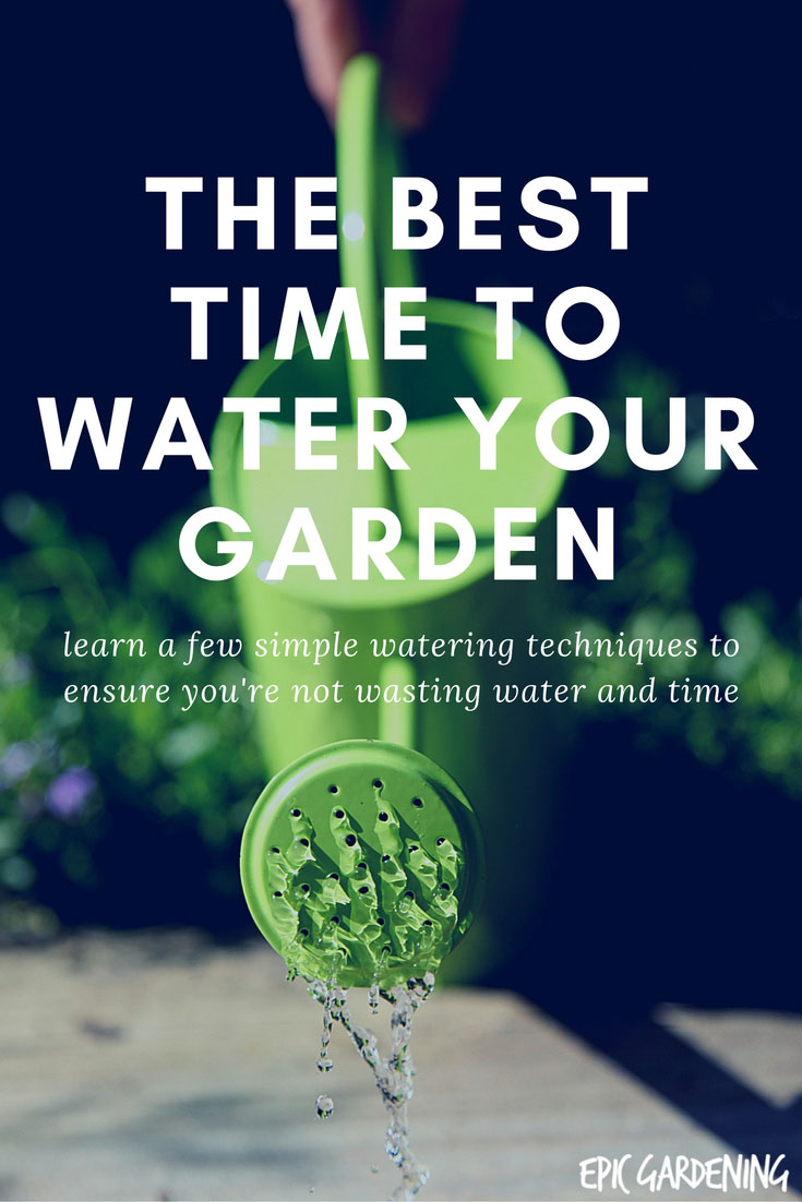 Best time to water vegetable garden