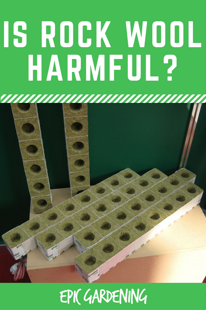 Rockwool has long been a popular media for growing hydroponic fruits, vegetables and herbs. However, I'm going to make the case against rockwool and argue why you should never use rockwool again because rockwool is harmful.