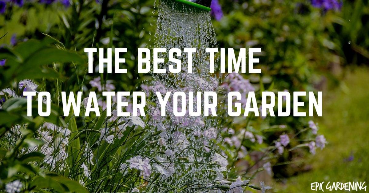 Best time to water vegetable garden