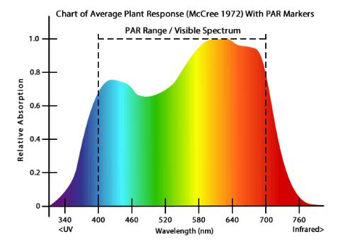 Average Plant Response