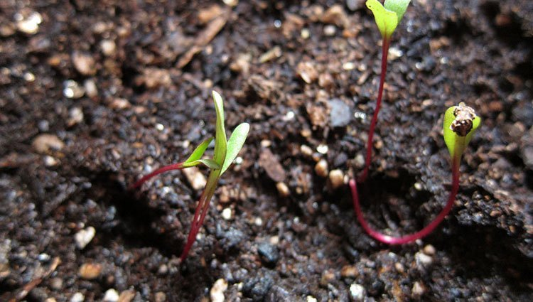 The Best Potting Soils: How to Choose The Right Potting Mix For Your Plants