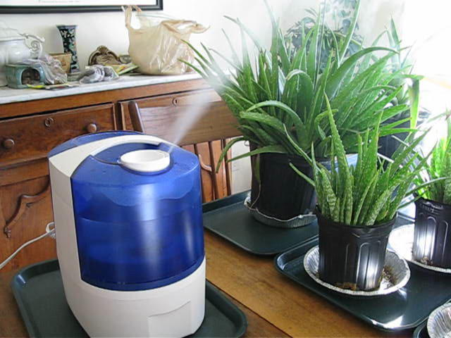 The Best Plant Humidifiers For Your Indoor Garden