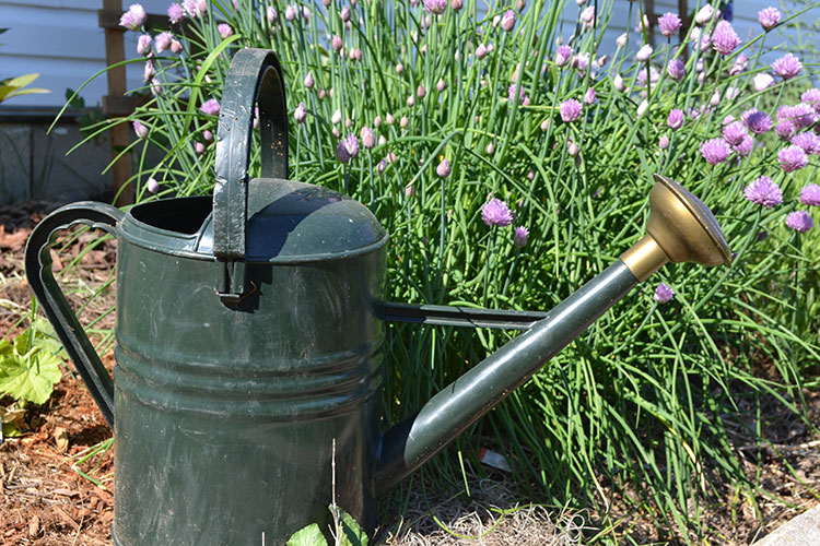 The best watering cans based on your needs in the garden