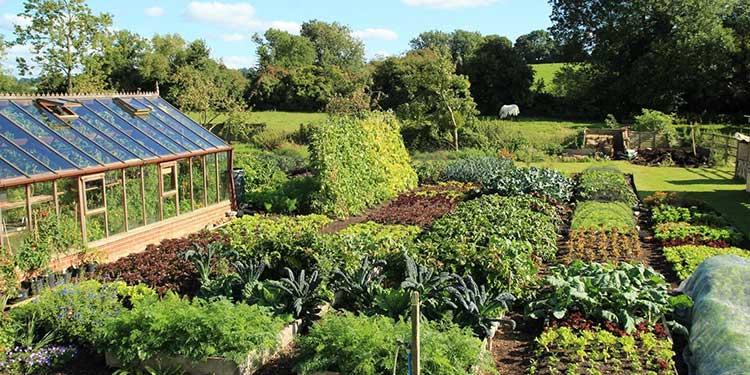 20+ Inspiring and Free Gardening Documentaries