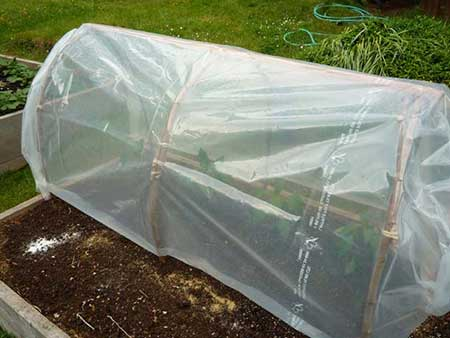 Temporary Rustic Greenhouse
