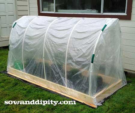 Tomato Tunnel Greenhouse